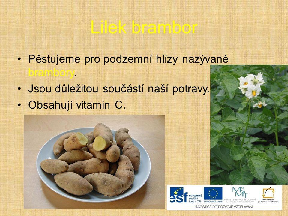 Lilek brambor Pěstujeme pro podzemní hlízy nazývané brambory.