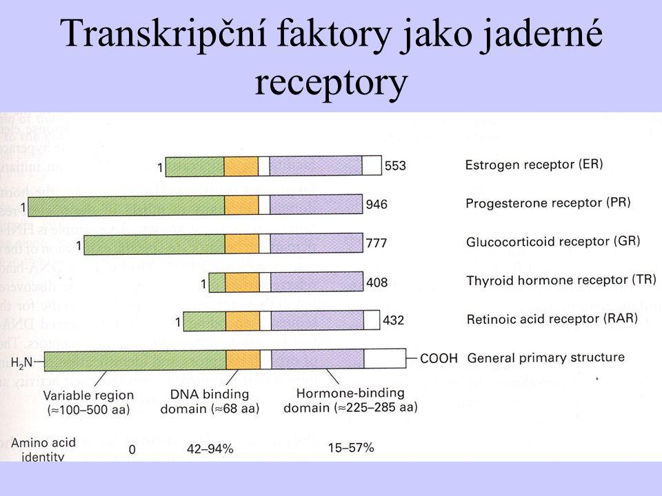 Transkripční faktory jako jaderné receptory