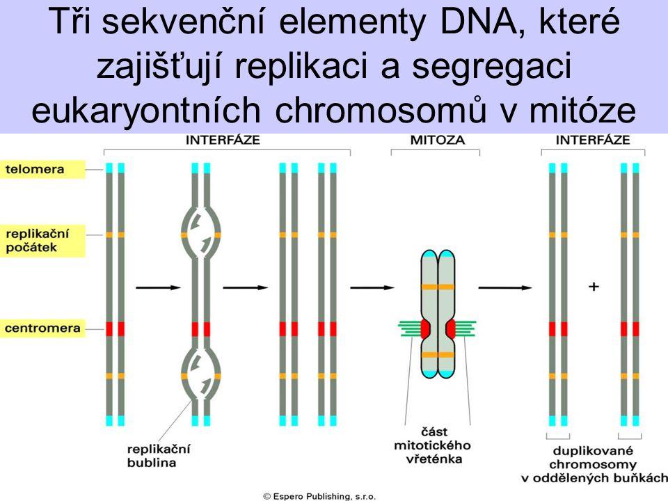 Tři sekvenční elementy DNA, které zajišťují replikaci a segregaci eukaryontních chromosomů v mitóze