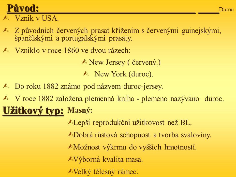 Původ: Duroc Užitkový typ: Vznik v USA.
