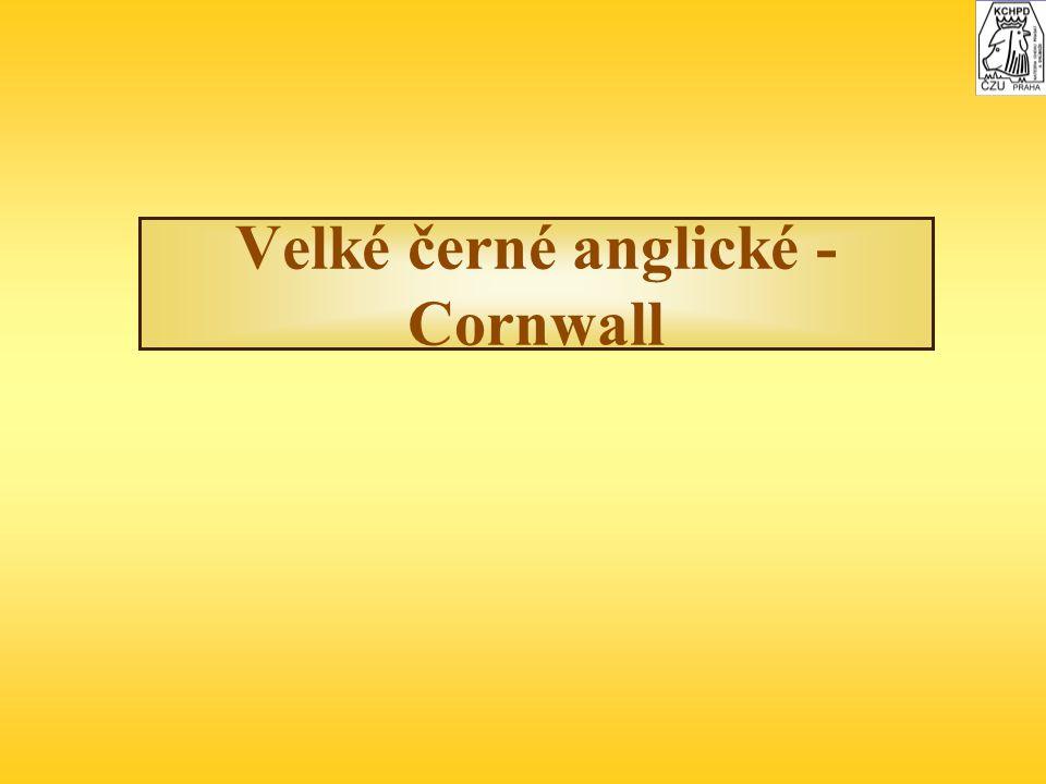 Velké černé anglické - Cornwall