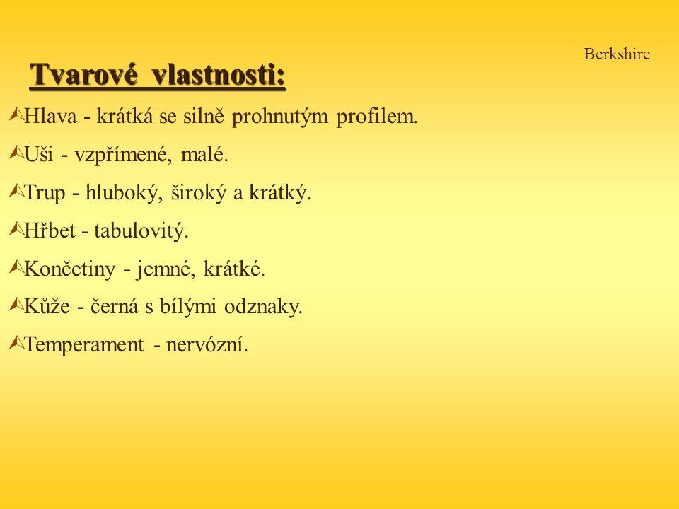 Tvarové vlastnosti: Hlava - krátká se silně prohnutým profilem.