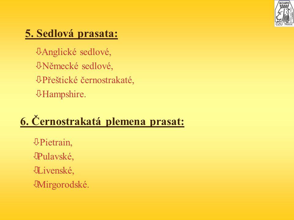 6. Černostrakatá plemena prasat: