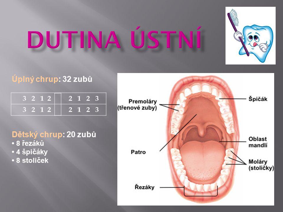 Dutina Ústní Úplný chrup: 32 zubů Dětský chrup: 20 zubů