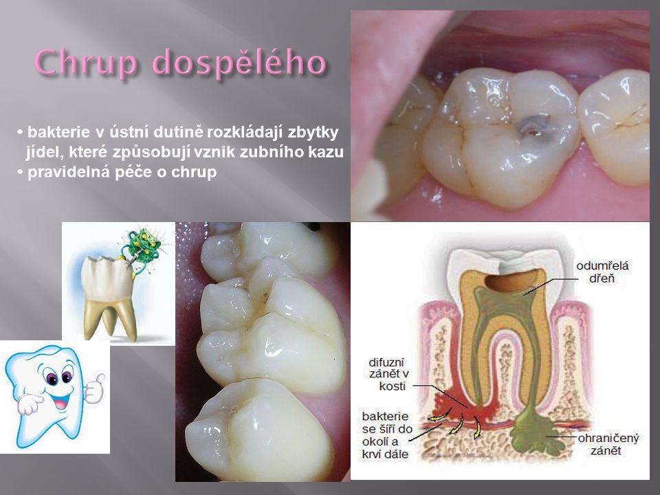 Chrup dospělého • bakterie v ústní dutině rozkládají zbytky