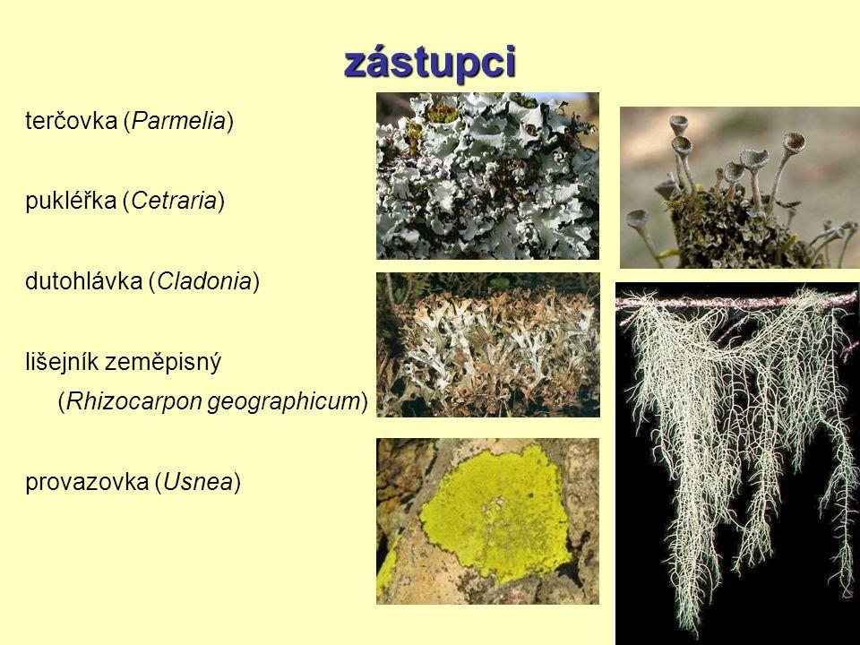 zástupci terčovka (Parmelia) pukléřka (Cetraria) dutohlávka (Cladonia)