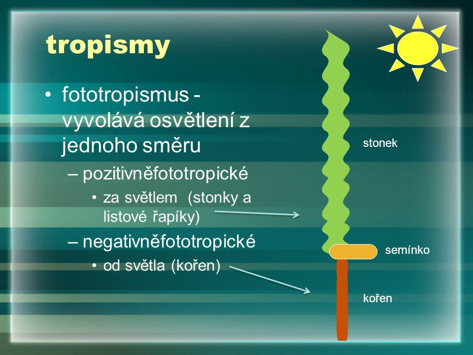 tropismy fototropismus -vyvolává osvětlení z jednoho směru