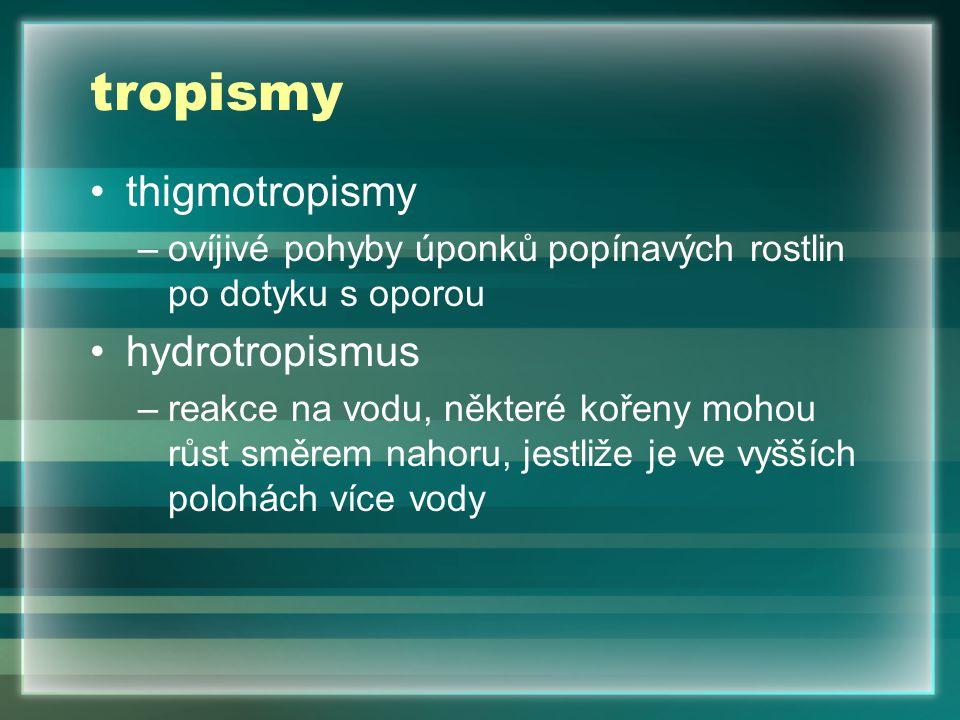 tropismy thigmotropismy hydrotropismus