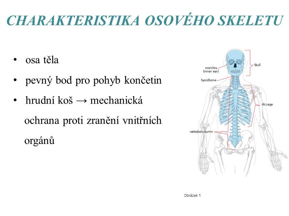 CHARAKTERISTIKA OSOVÉHO SKELETU