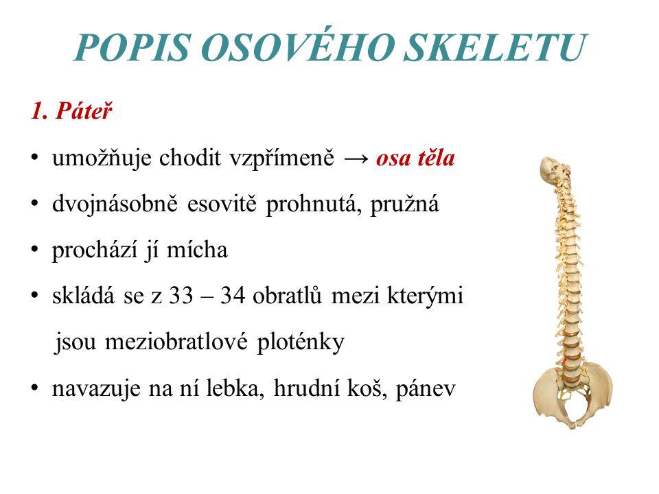 POPIS OSOVÉHO SKELETU 1. Páteř umožňuje chodit vzpřímeně → osa těla