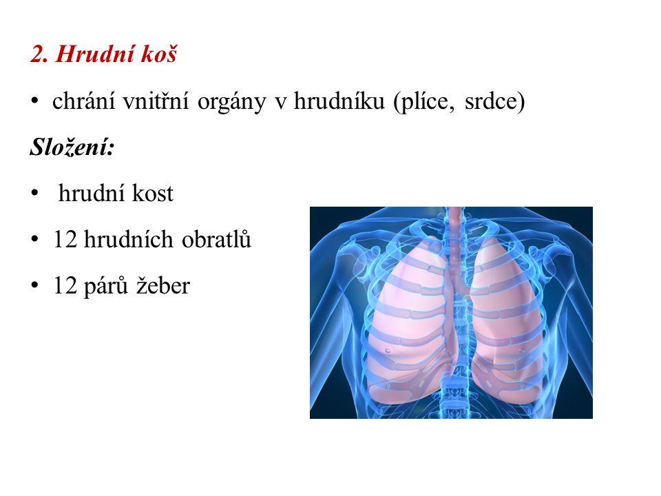 2. Hrudní koš chrání vnitřní orgány v hrudníku (plíce, srdce) Složení: hrudní kost. 12 hrudních obratlů.