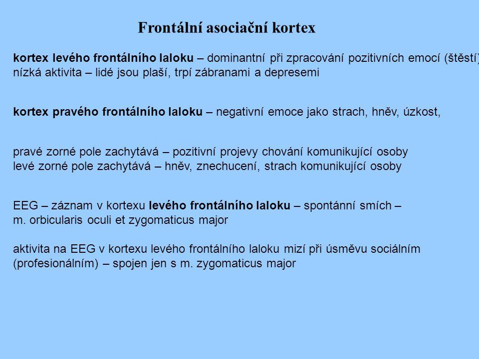 Frontální asociační kortex
