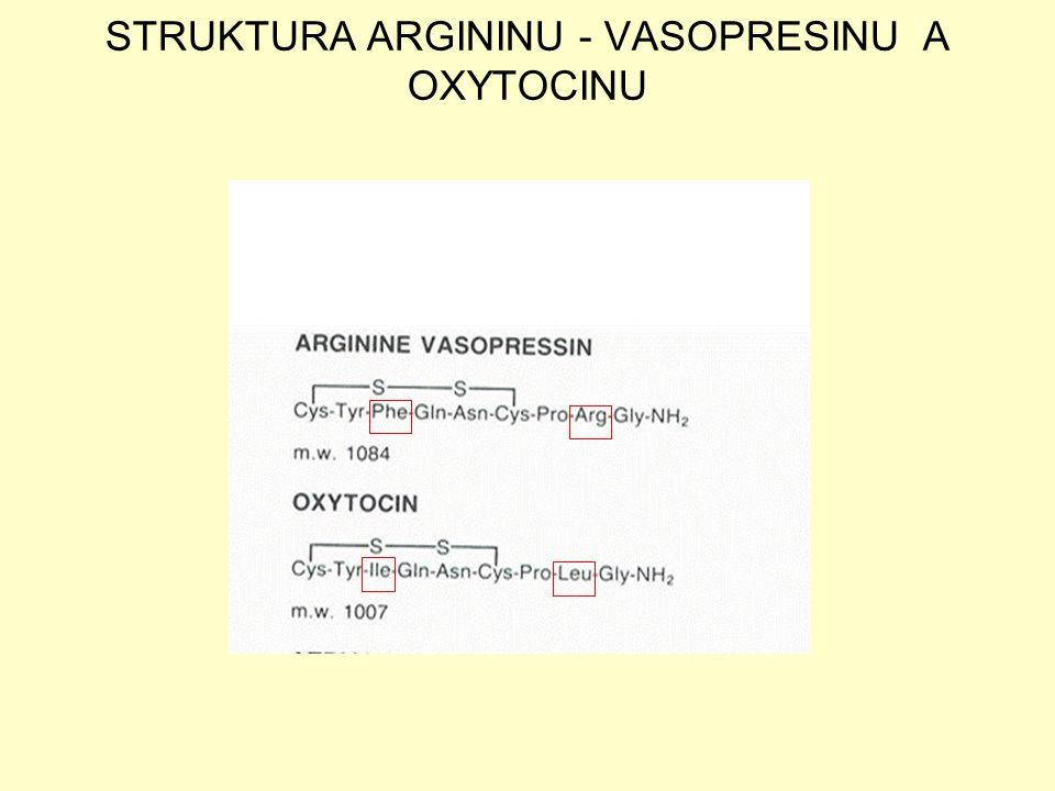 STRUKTURA ARGININU - VASOPRESINU A OXYTOCINU