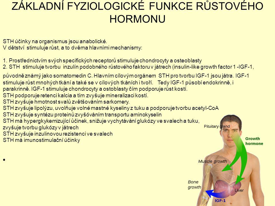 ZÁKLADNÍ FYZIOLOGICKÉ FUNKCE RŮSTOVÉHO HORMONU