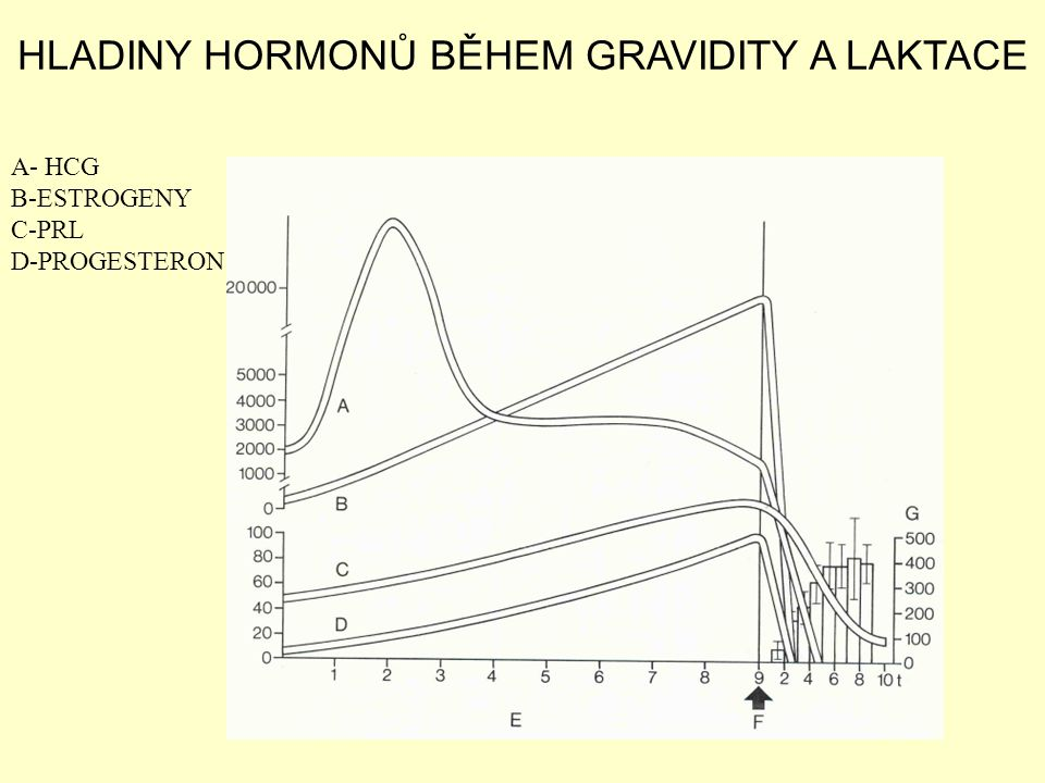 HLADINY HORMONŮ BĚHEM GRAVIDITY A LAKTACE