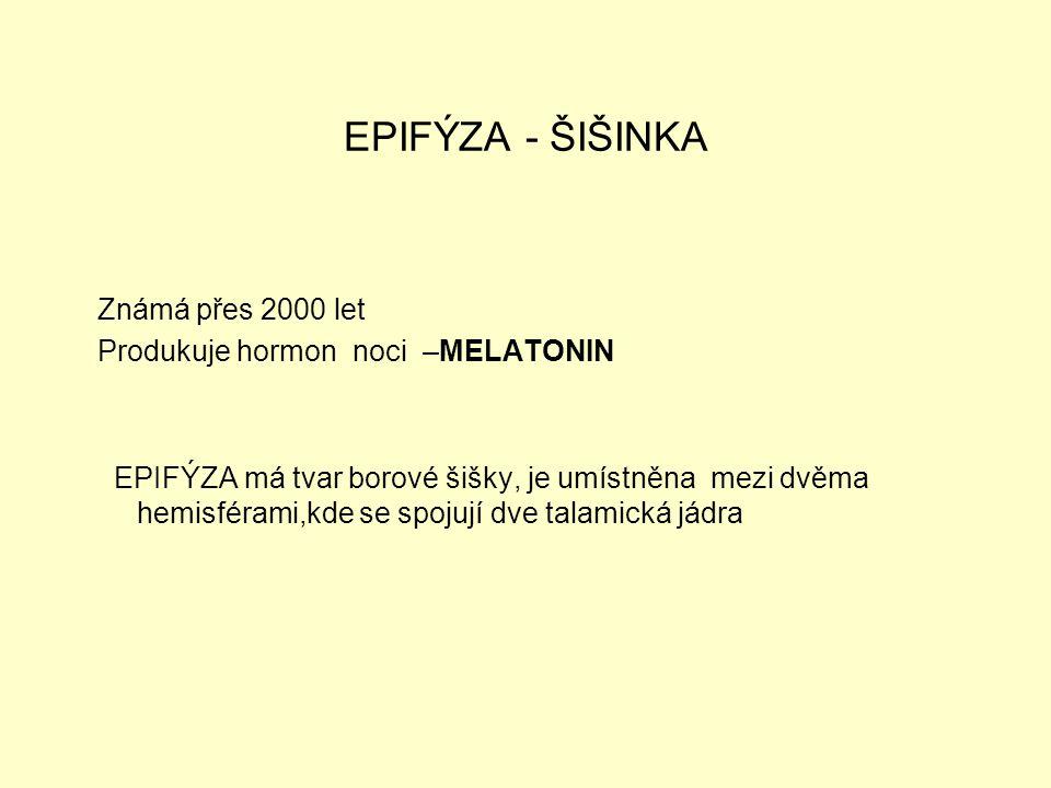 EPIFÝZA - ŠIŠINKA Známá přes 2000 let Produkuje hormon noci –MELATONIN