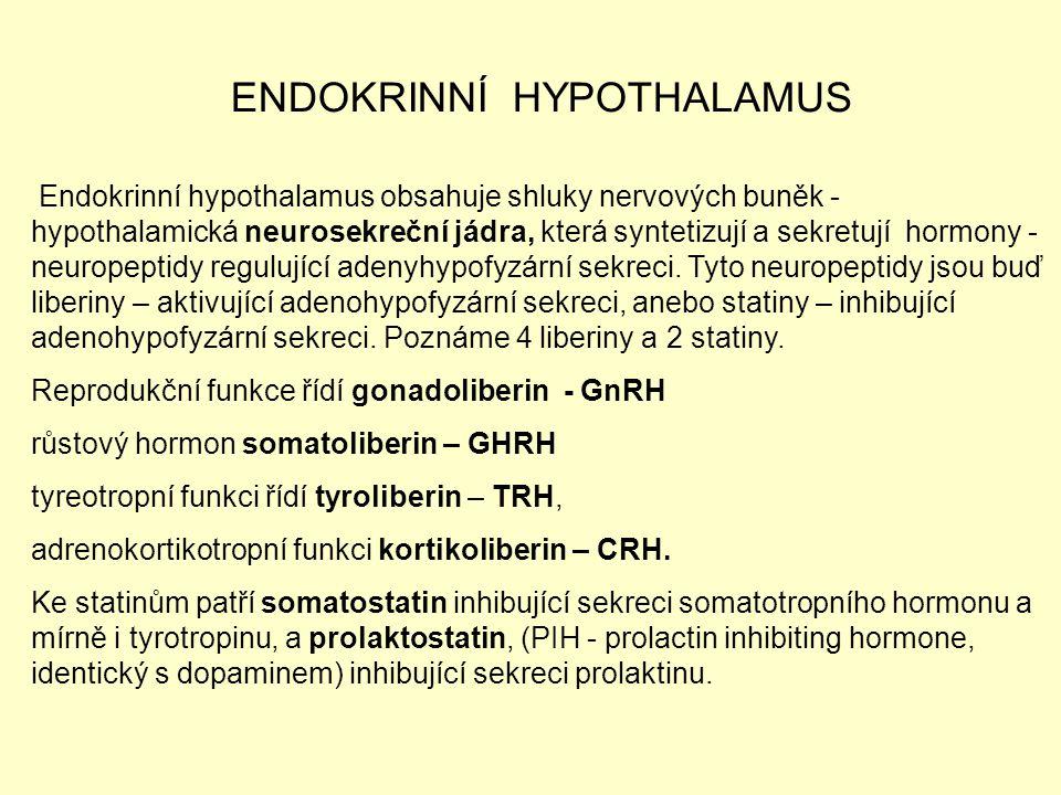 ENDOKRINNÍ HYPOTHALAMUS