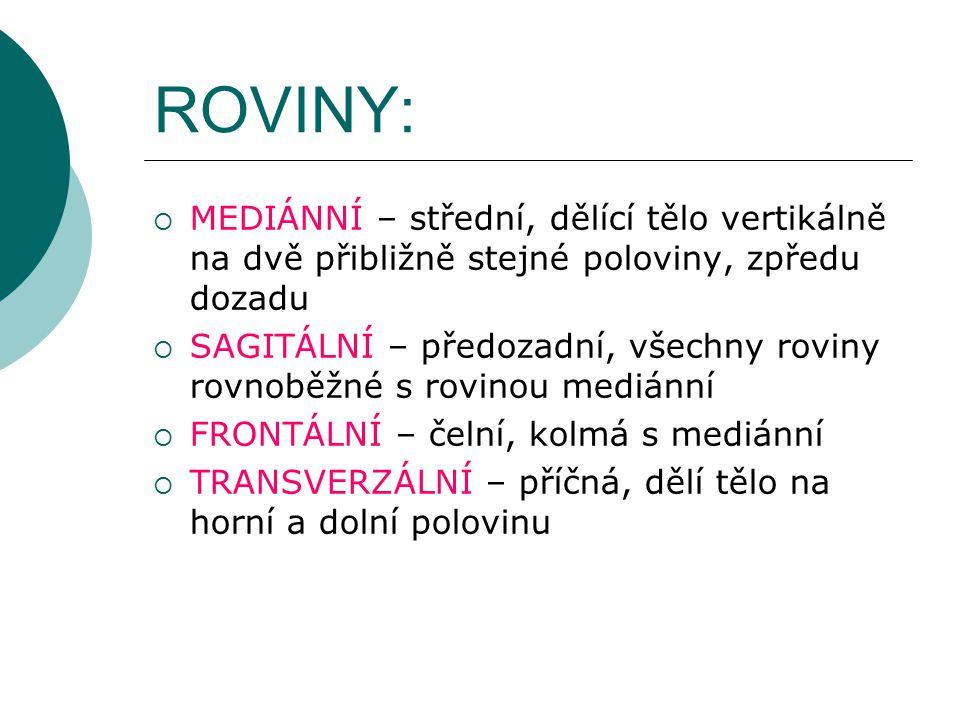 ROVINY: MEDIÁNNÍ – střední, dělící tělo vertikálně na dvě přibližně stejné poloviny, zpředu dozadu.