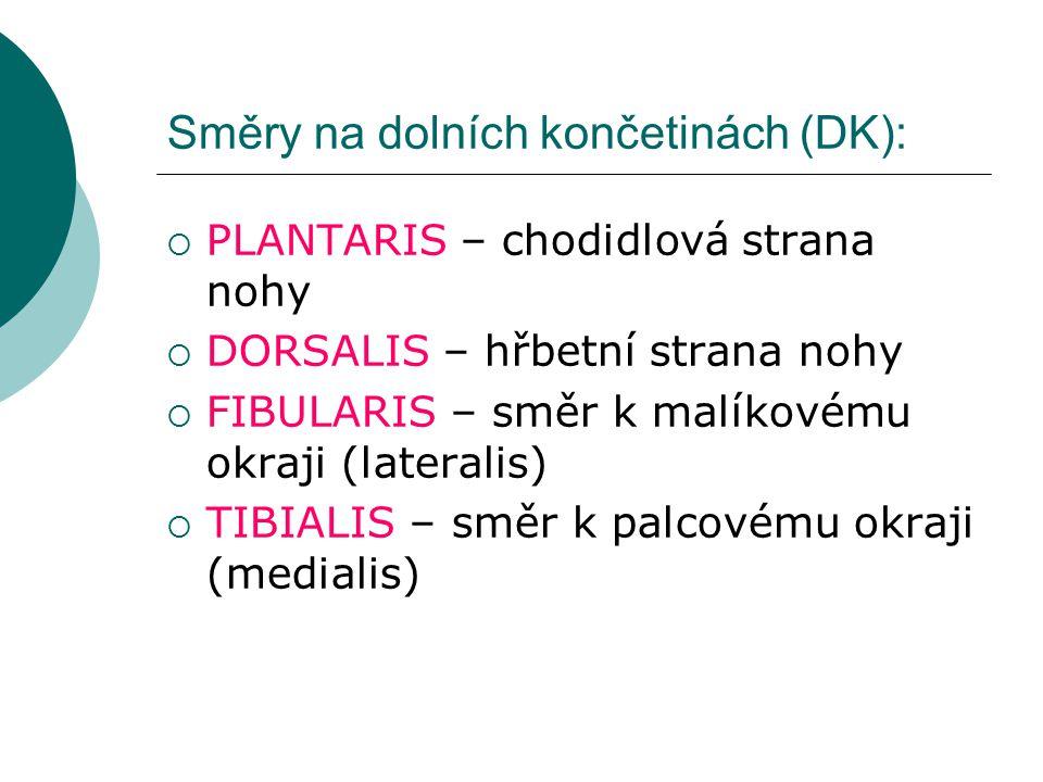 Směry na dolních končetinách (DK):