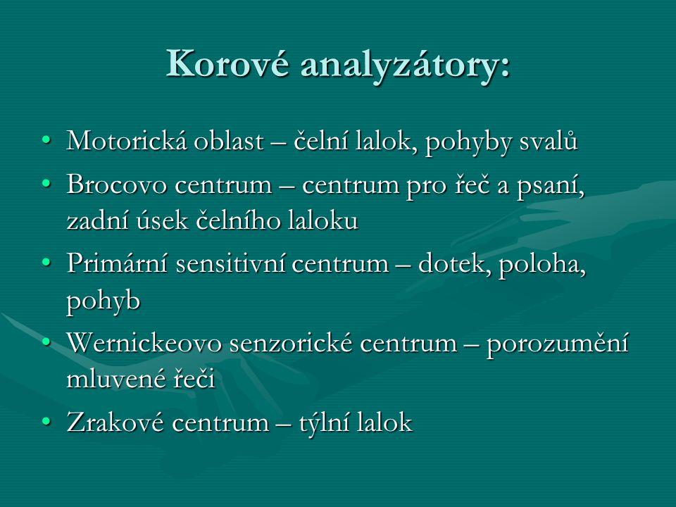 Korové analyzátory: Motorická oblast – čelní lalok, pohyby svalů