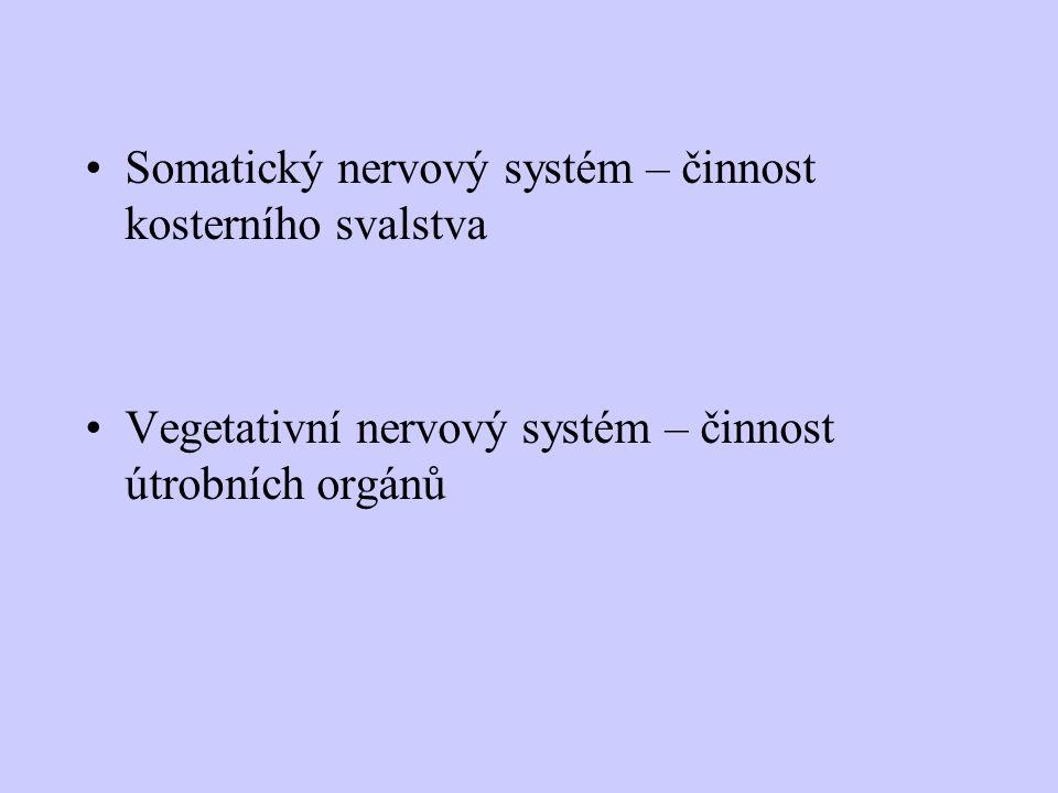 Somatický nervový systém – činnost kosterního svalstva