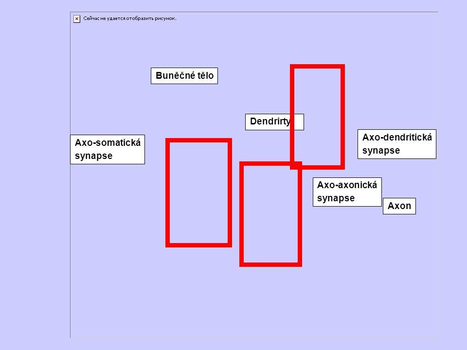 Buněčné tělo Dendrirty Axo-dendritická synapse Axo-axonická Axon Axo-somatická