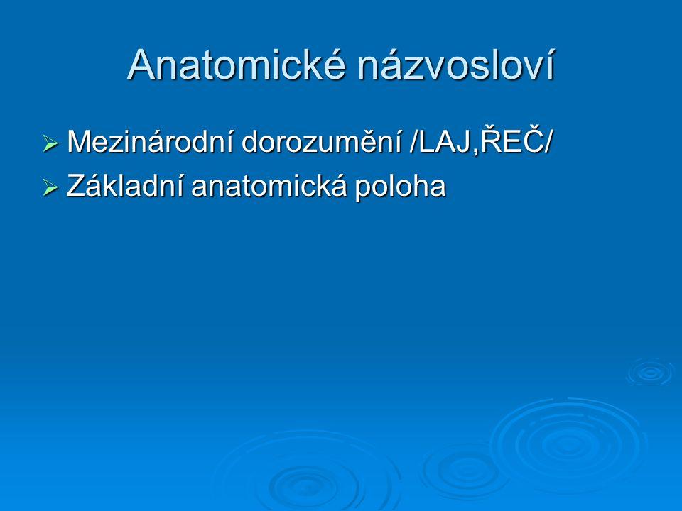 Anatomické názvosloví