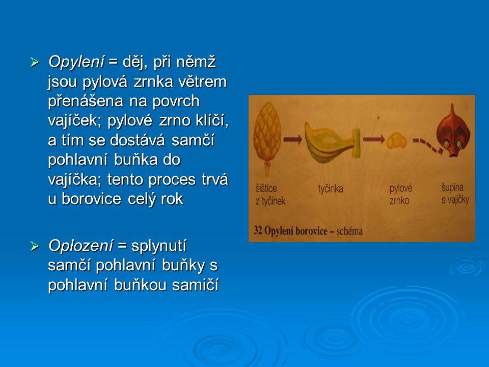 Opylení = děj, při němž jsou pylová zrnka větrem přenášena na povrch vajíček; pylové zrno klíčí, a tím se dostává samčí pohlavní buňka do vajíčka; tento proces trvá u borovice celý rok