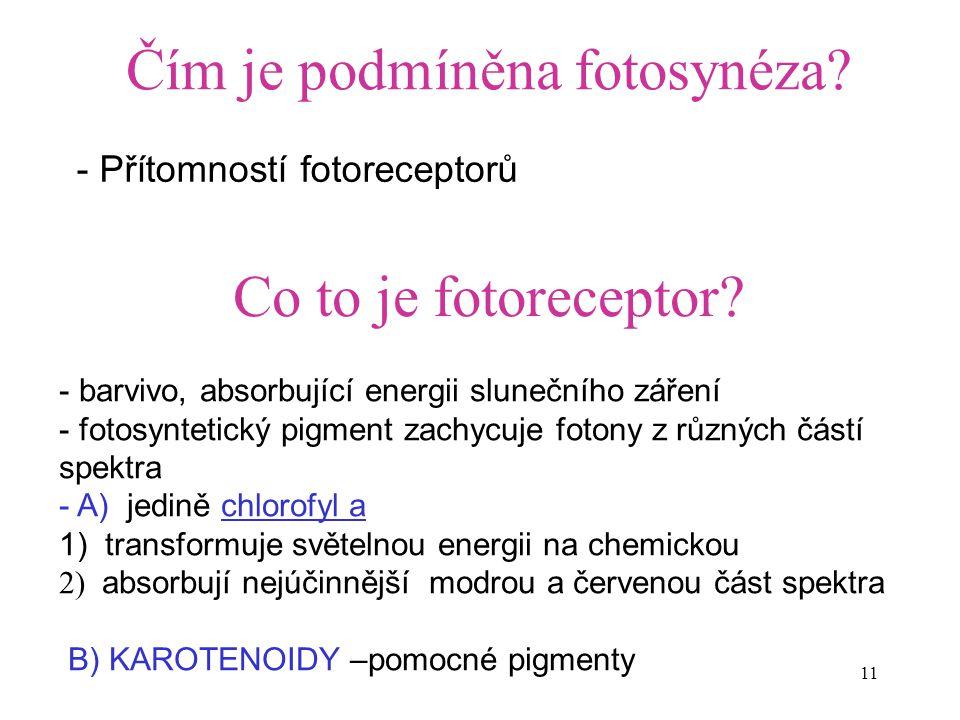 Čím je podmíněna fotosynéza