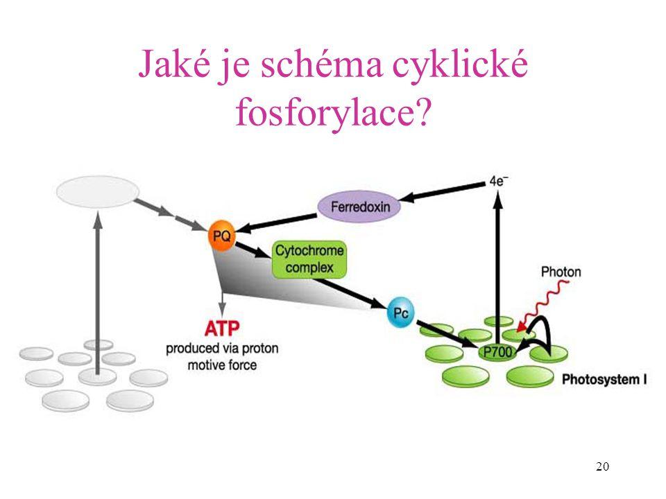 Jaké je schéma cyklické fosforylace