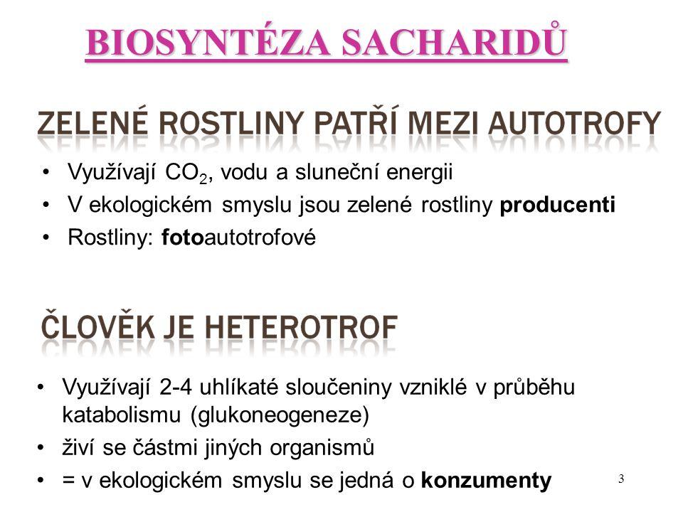 BIOSYNTÉZA SACHARIDŮ Využívají CO2, vodu a sluneční energii
