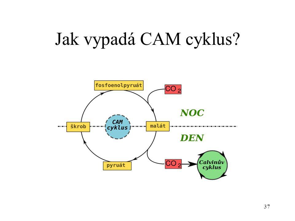 Jak vypadá CAM cyklus