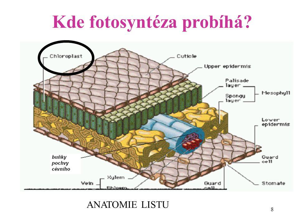 Kde fotosyntéza probíhá