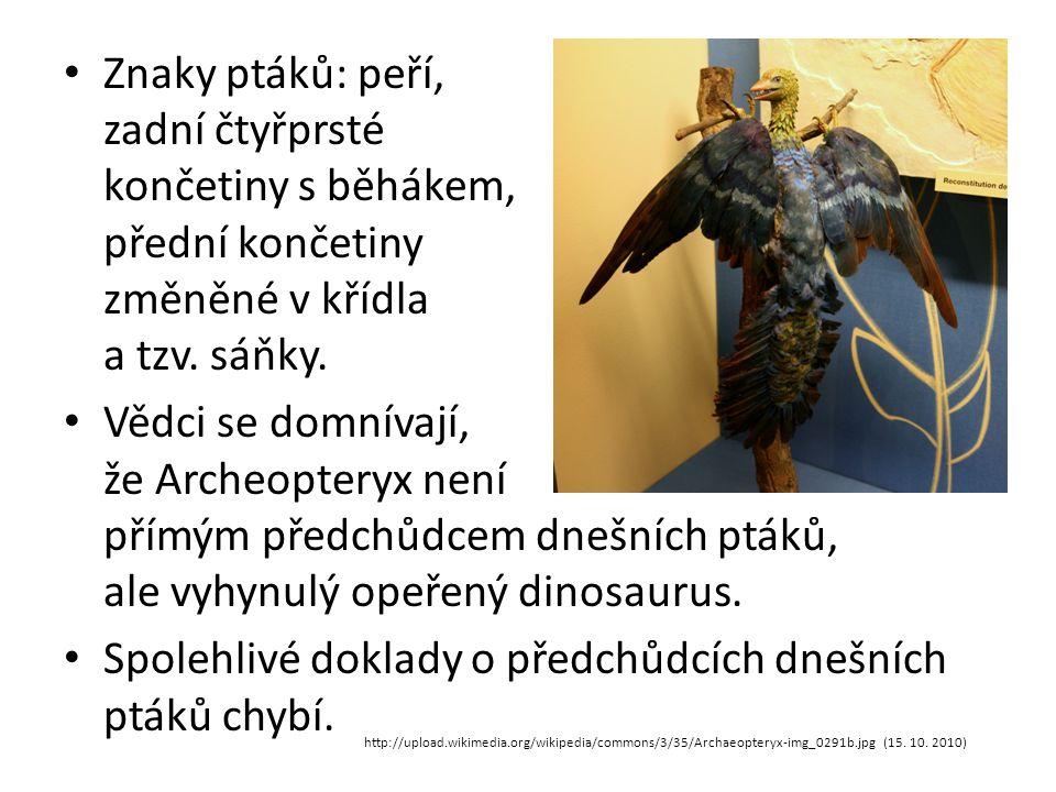 Spolehlivé doklady o předchůdcích dnešních ptáků chybí.