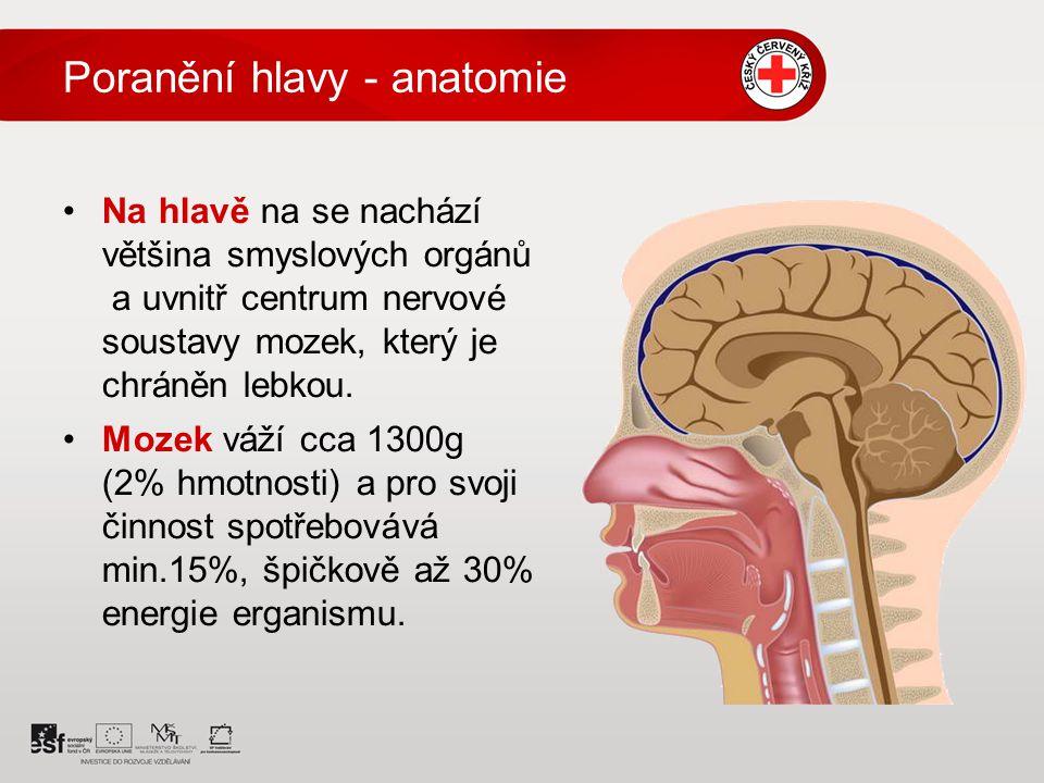 Poranění hlavy - anatomie