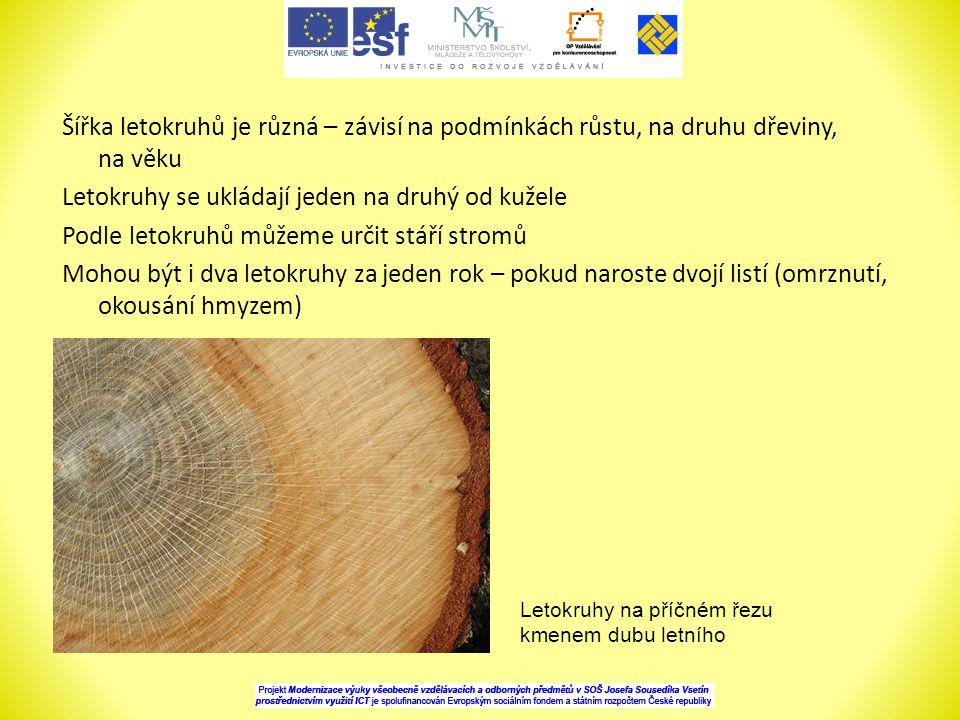 Šířka letokruhů je různá – závisí na podmínkách růstu, na druhu dřeviny, na věku Letokruhy se ukládají jeden na druhý od kužele Podle letokruhů můžeme určit stáří stromů Mohou být i dva letokruhy za jeden rok – pokud naroste dvojí listí (omrznutí, okousání hmyzem)