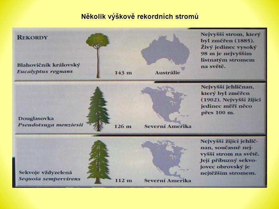 Několik výškově rekordních stromů