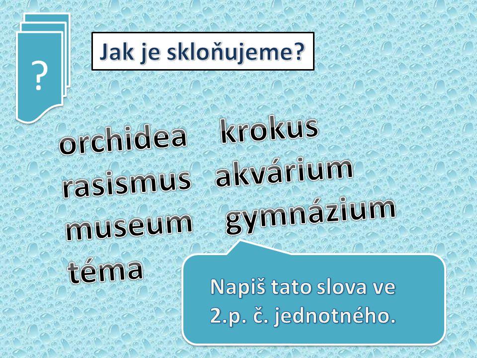 orchidea krokus rasismus akvárium museum gymnázium téma