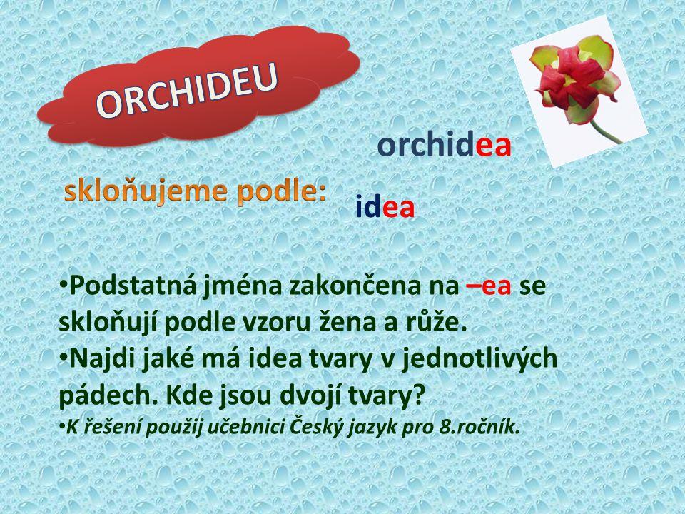 ORCHIDEU orchidea skloňujeme podle: idea