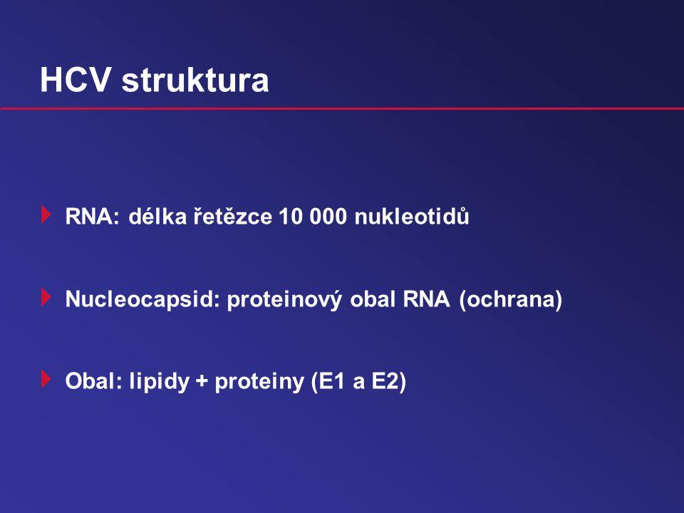 HCV struktura RNA: délka řetězce 10 000 nukleotidů