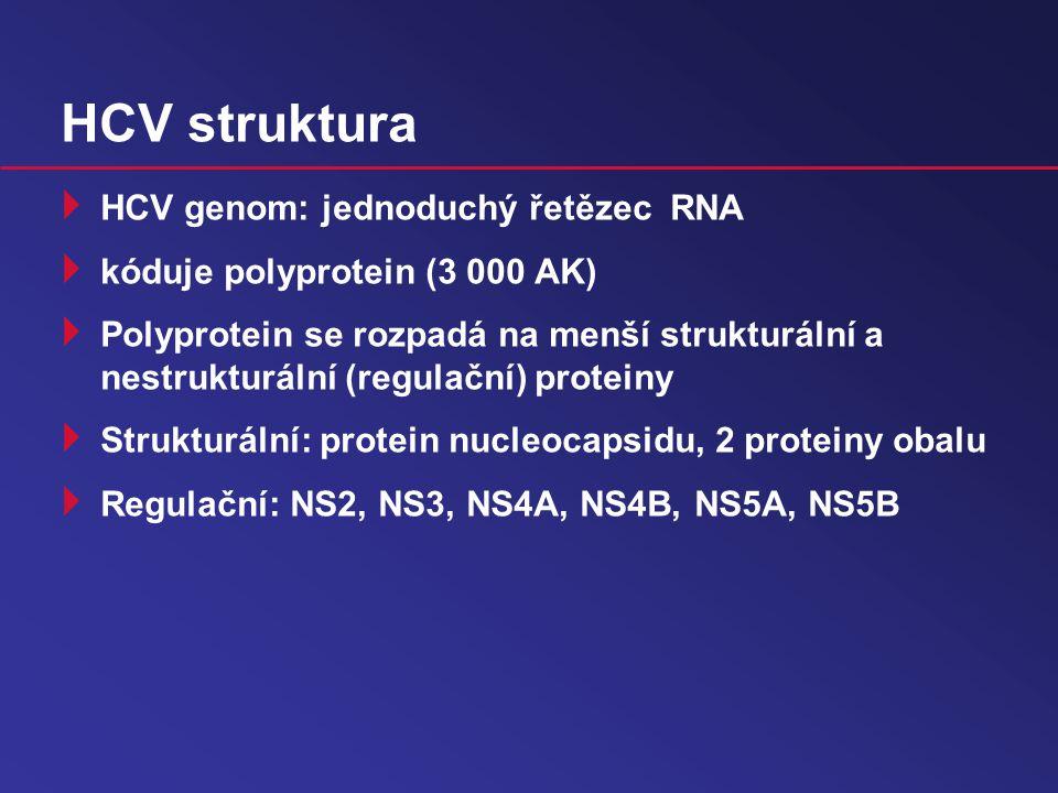 HCV struktura HCV genom: jednoduchý řetězec RNA
