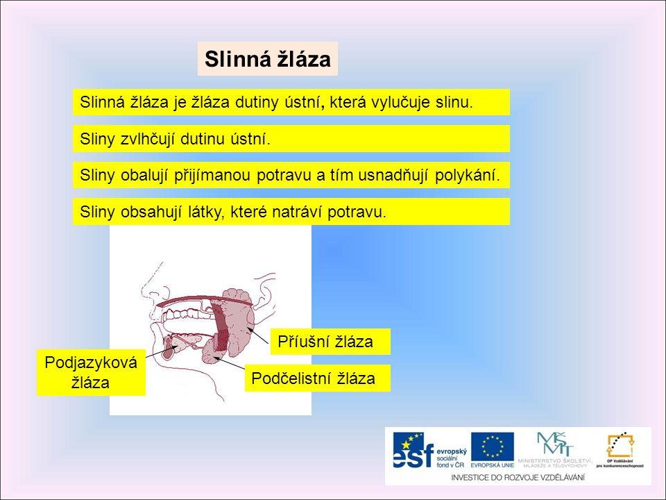 Slinná žláza Slinná žláza je žláza dutiny ústní, která vylučuje slinu.