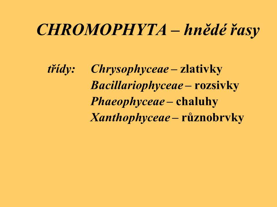 CHROMOPHYTA – hnědé řasy