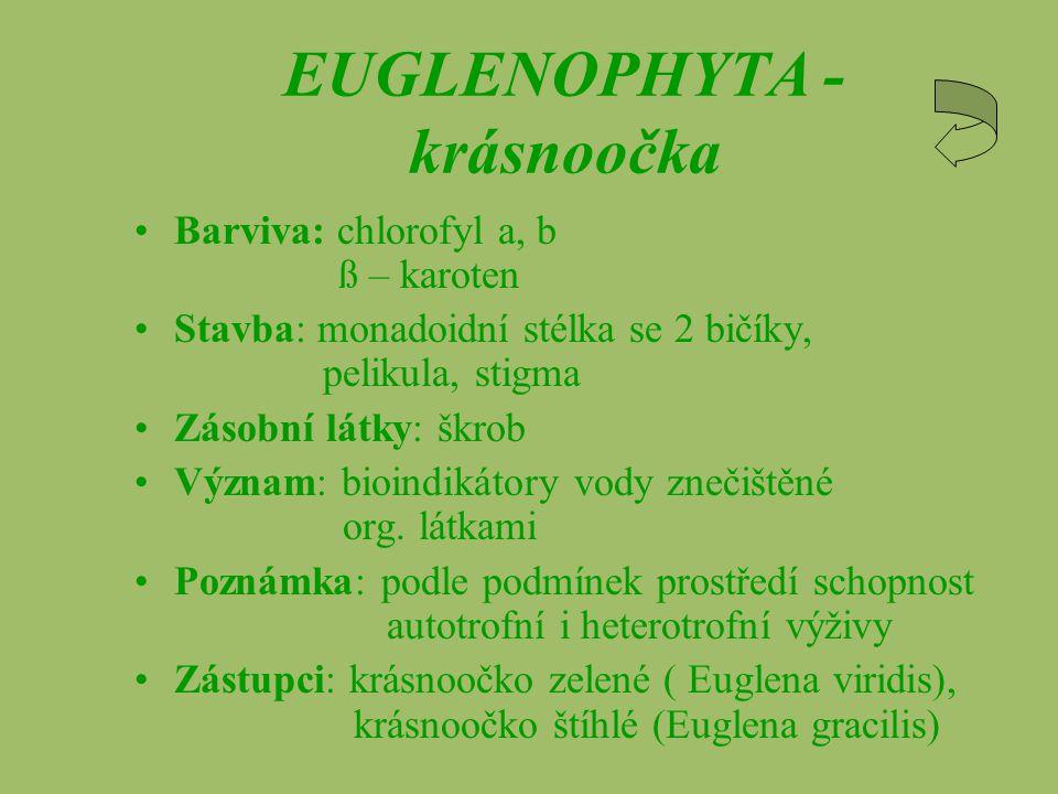 EUGLENOPHYTA - krásnoočka