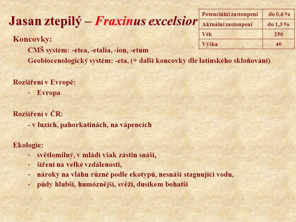 Jasan ztepilý – Fraxinus excelsior