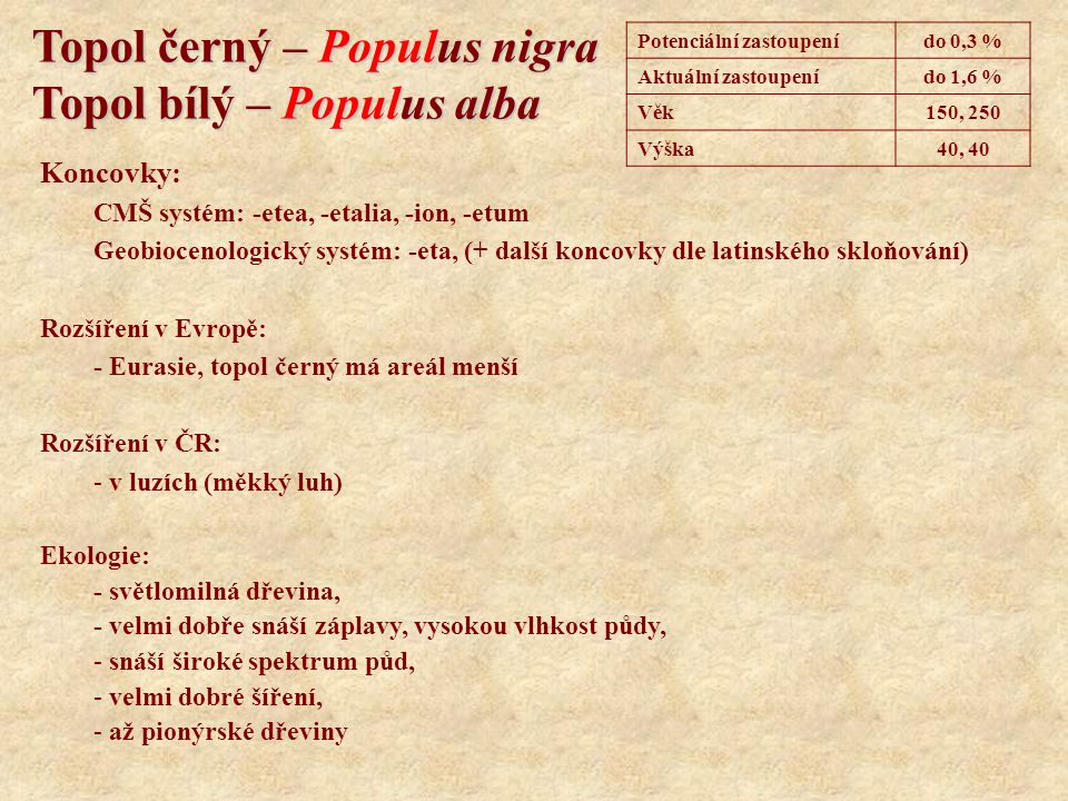 Topol černý – Populus nigra Topol bílý – Populus alba