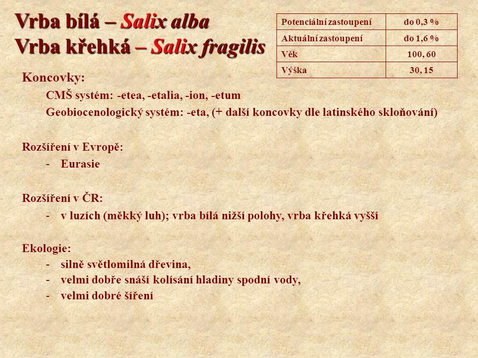 Vrba bílá – Salix alba Vrba křehká – Salix fragilis