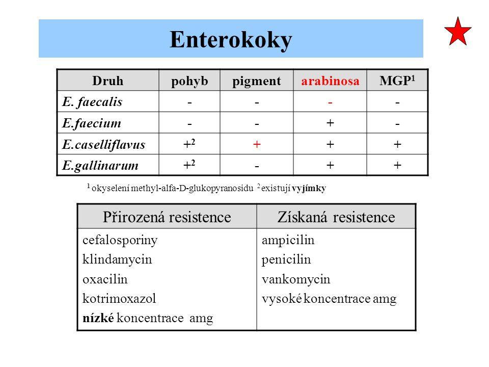Enterokoky Přirozená resistence Získaná resistence Druh pohyb pigment