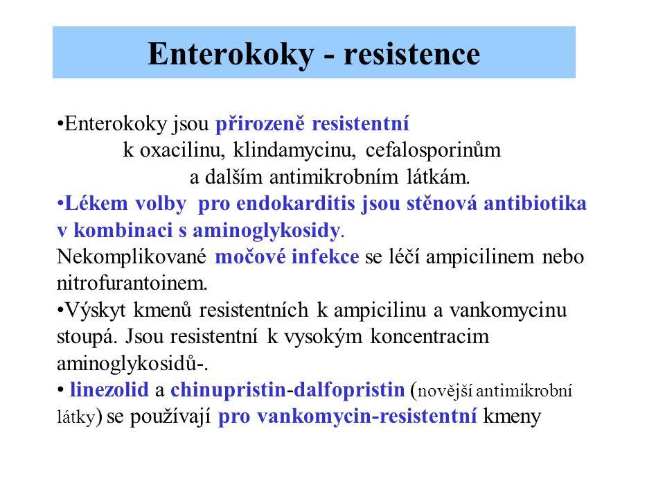 Enterokoky - resistence