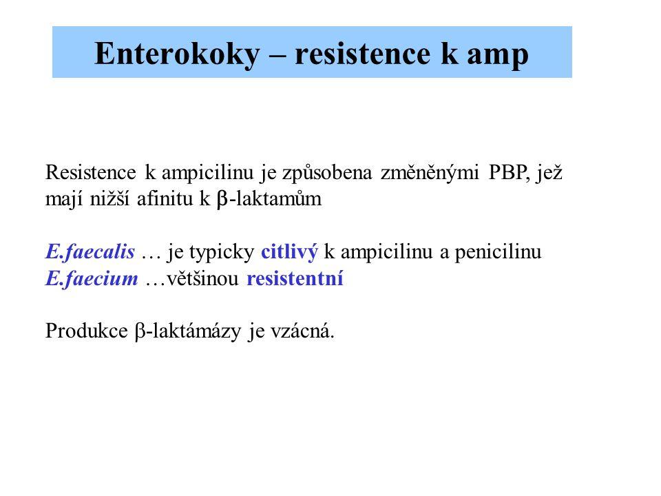 Enterokoky – resistence k amp